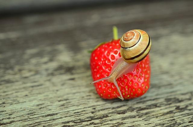 strawberry-799809_640.jpg