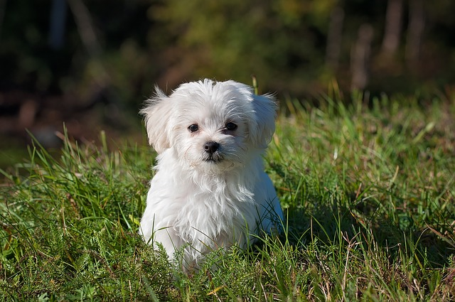 dog-1123016_640.jpg