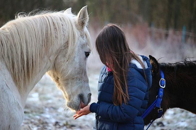 horse-1130195_640.jpg