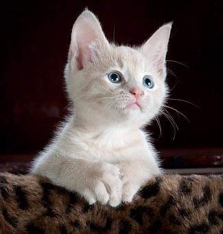 kitty-551554__340.jpg