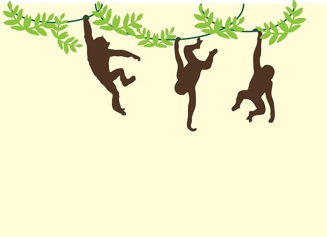 monkeys-909278_640.jpg