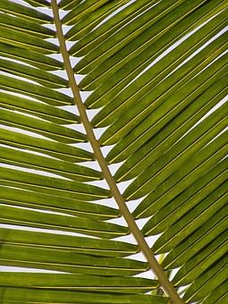 palm-1029010__340.jpg
