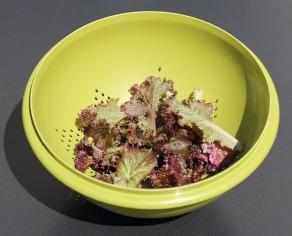 salad-959061_640