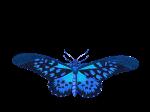 butterfly-1525813_640