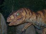 velociraptor-950447_640