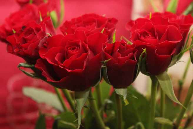 red roses valentine s day flowers