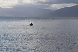 dolphin-2633050_640